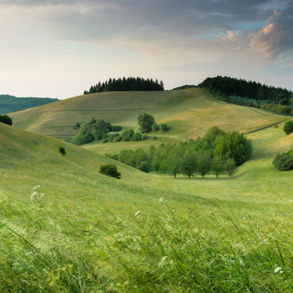 green-hills-with-forest-under-cloudy-sky-during-daytime